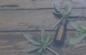 Catoctin College - Cannabis Courses